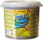 Tropical Sterlet