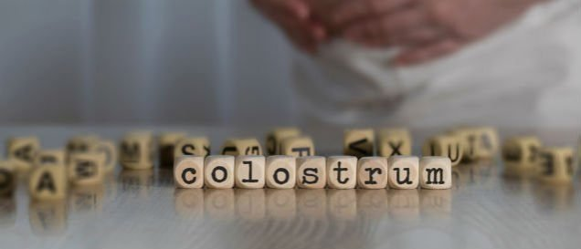 Colostrum-Test